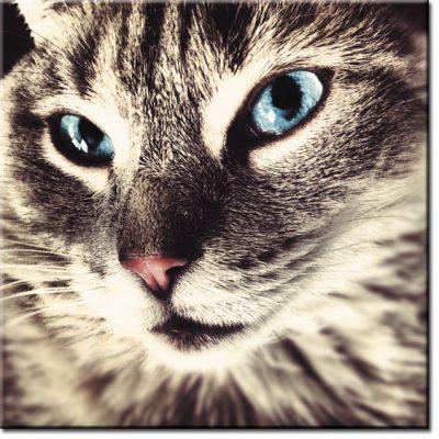 obrazy na ściany koty
