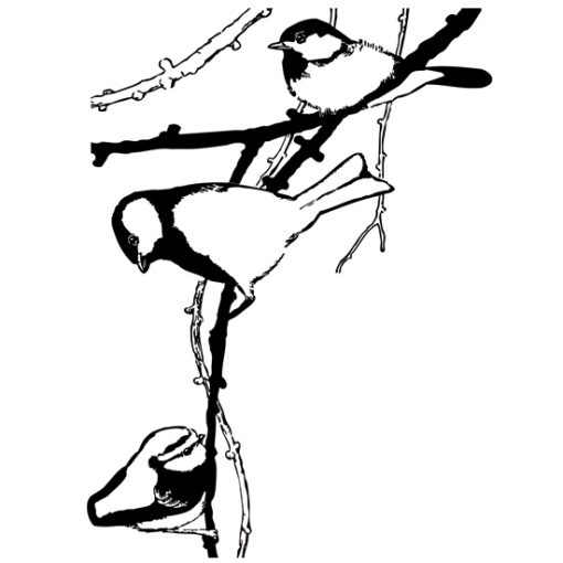 tatuaż na ścianę ptaszki na drzewie