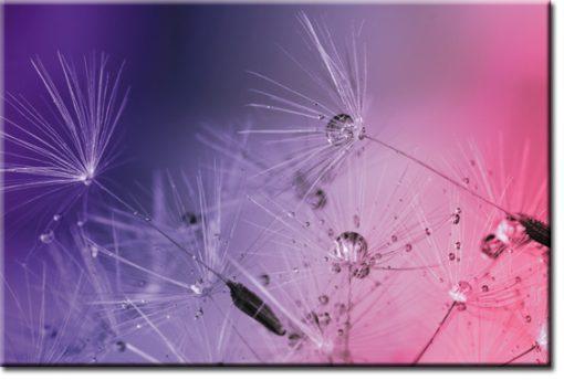 fototapeta fioletowe dmuchawce