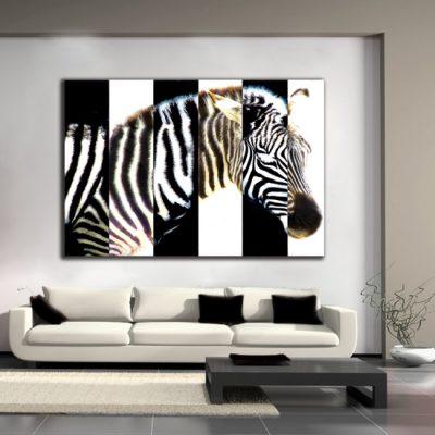 obrazy z zebra