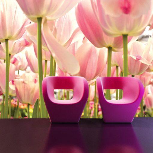 fototap[ety z tulipanami
