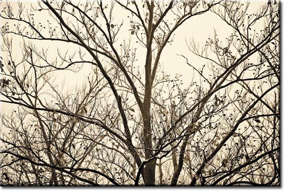 ozdoby z drzewami