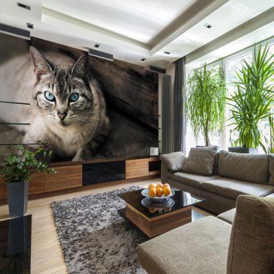fototapety z kotkami
