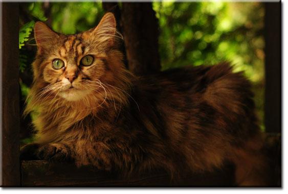 fototapety z kotami