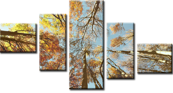kaskada z drzewami