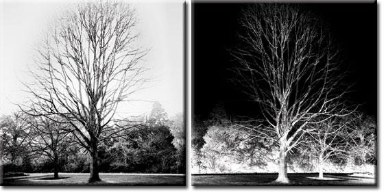 dyptyk z drzewami