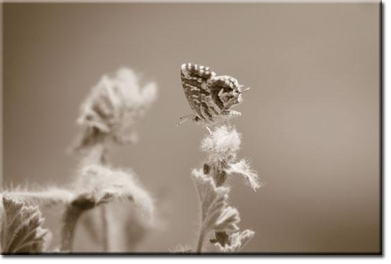 obrazy z motylem