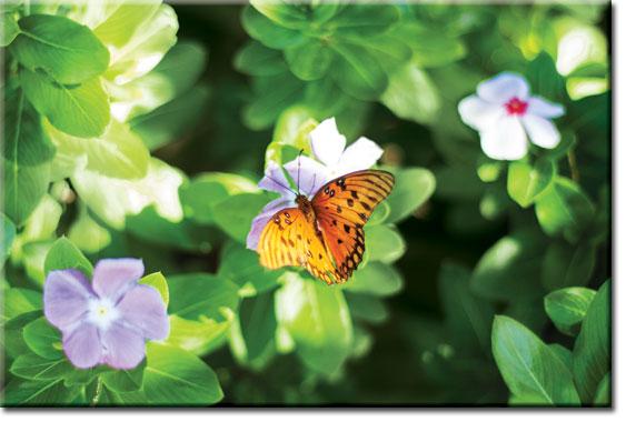 obrazy z motylkami
