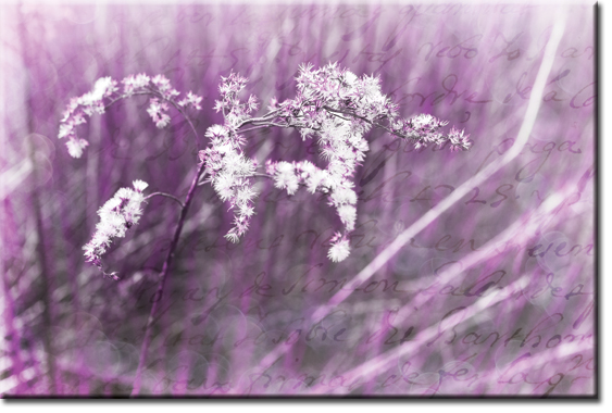 obrazy fioletowe