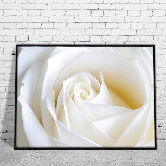 Plakat Z Białą Różą