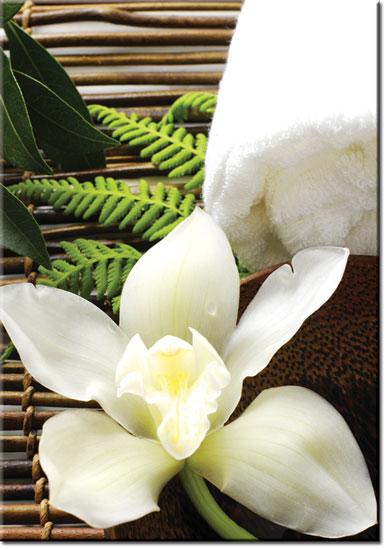 plakaty z orchideą