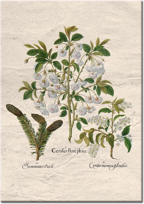 białe kwiatuszki na plakacie
