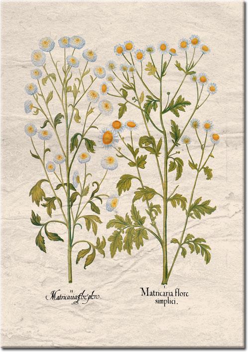 plakaty z ziołami