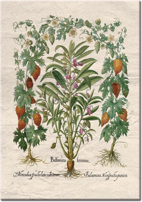 plakaty zkwitnącymi roślinami