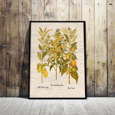 plakaty z pomarańczami