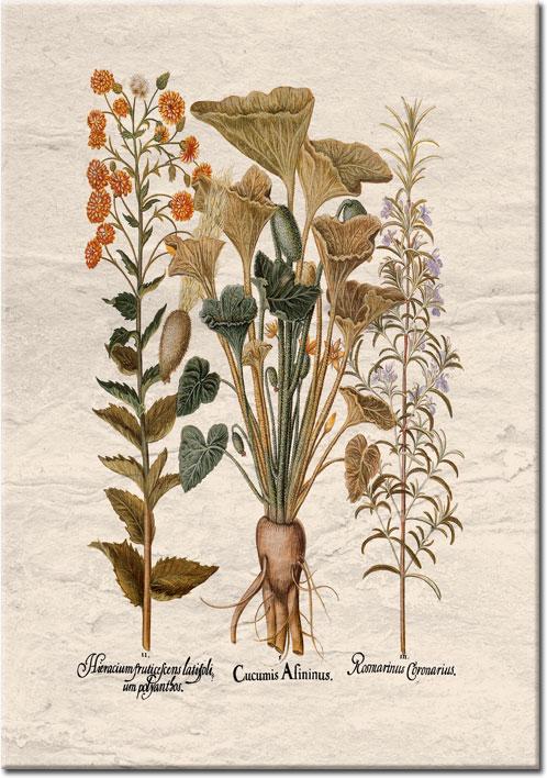 plakaty z botaniką