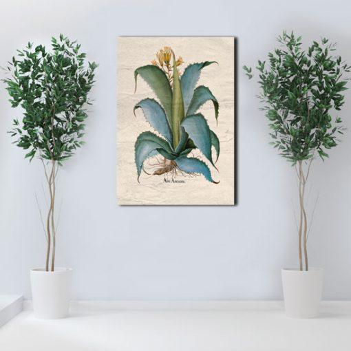 ozdoby z agawą