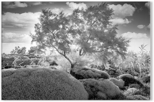 krajobraz biało-czarny z drzewkiem