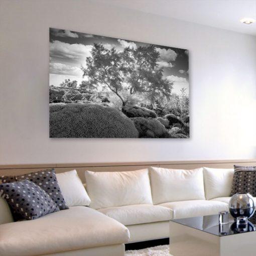 krajobraz z biało-czarnym drzewem