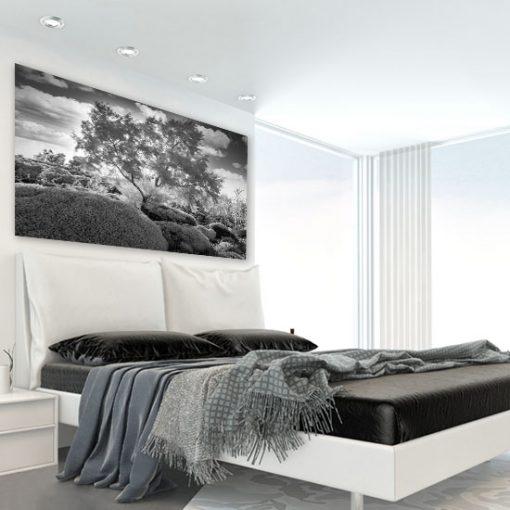 biało-czarny obraz z drzewem