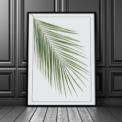 plakaty z palmami