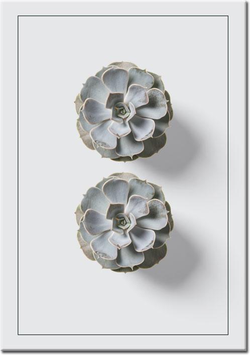 plakaty ze skalniakami
