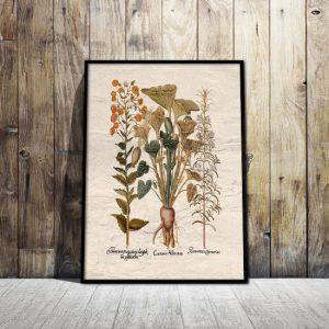 Plakaty zioła, przyprawy, kawa