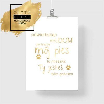 Plakat złoty mój pies