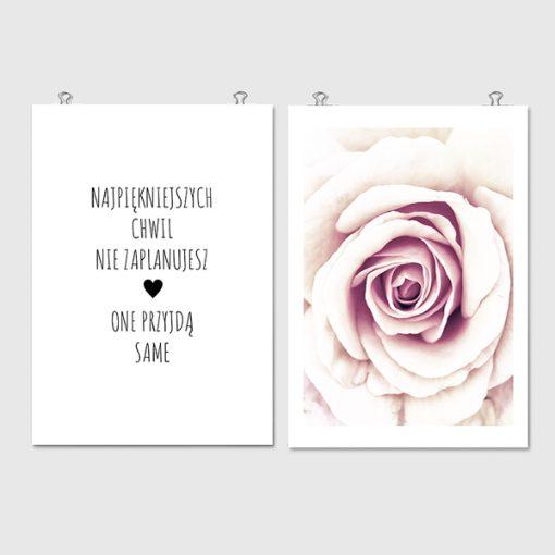 plakaty z różami