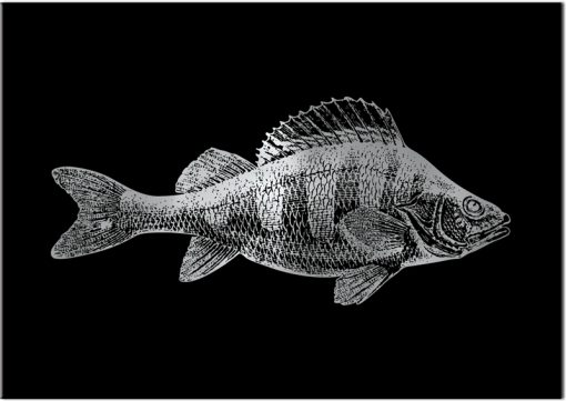 plakat z motywem srebrnej rybki