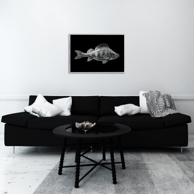 plakat z motywem srebrnej ryby