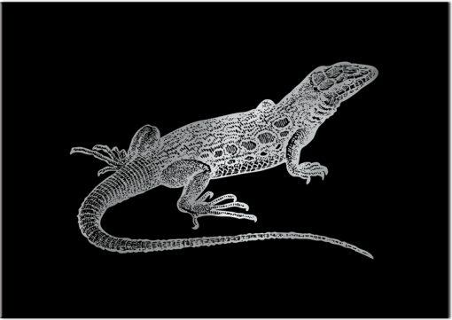 plakat jak srebro z motywem jaszczurki