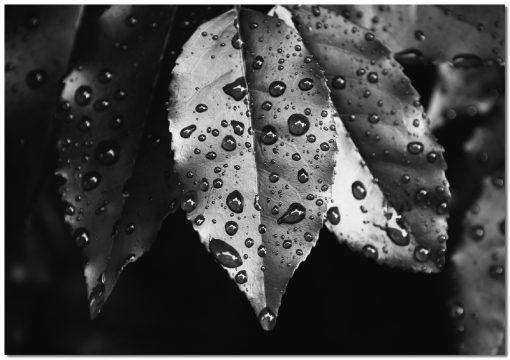 Obraz z liśćmi do salonu