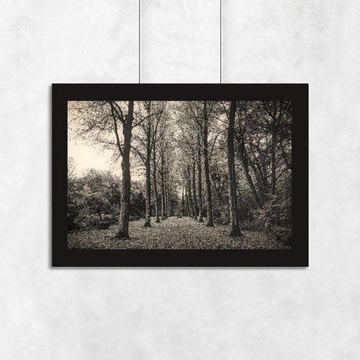 plakat z motywem lasu