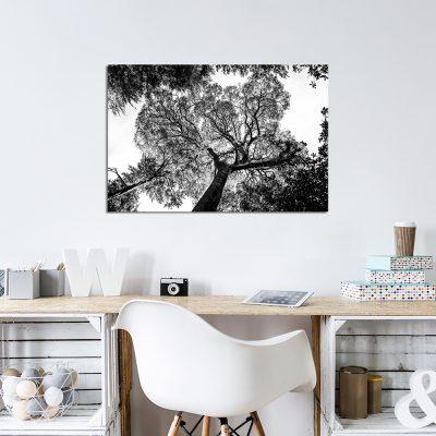 Obraz z motywem korony drzewa do biura