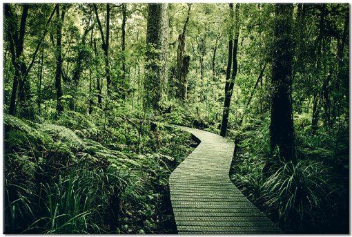 Obraz z drogą leśną w kolorze zielonym