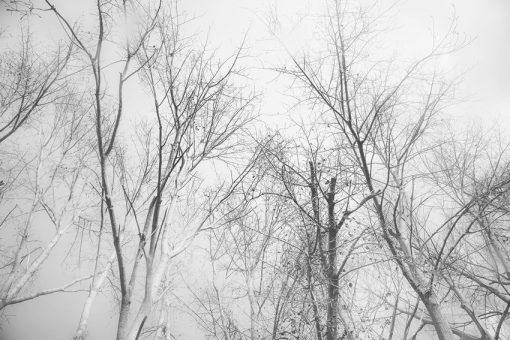 Fototapeta z motywem drzew do salonu