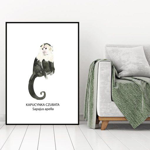 Plakat z kapucynką do salonu