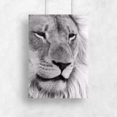 Plakat ze zdjęciem lwa