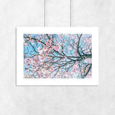 Plakat kwitnące drzewo