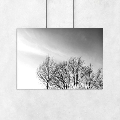 Plakat motyw drzew