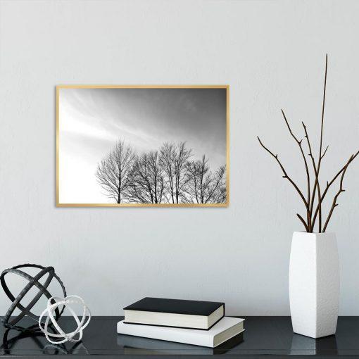 Plakat bezlistne drzewa