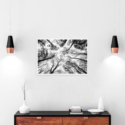 Plakat czarno-biały drzewa