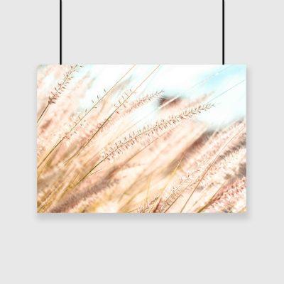 Plakat trawy łąkowe