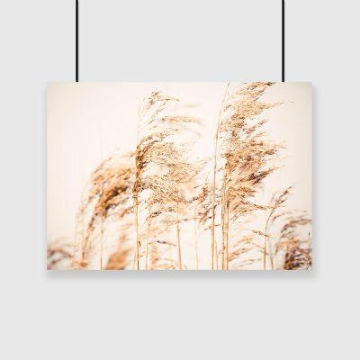 Plakat z motywem traw polnych