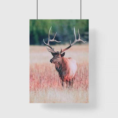 Plakat czerwony z jeleniem