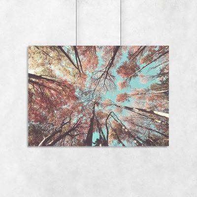 Plakat kolorowe drzewa