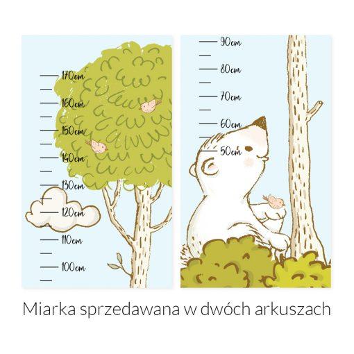 Miarka wzrostu zielone drzewo i miś