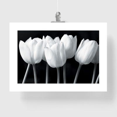 siedem tulipanów na plakacie