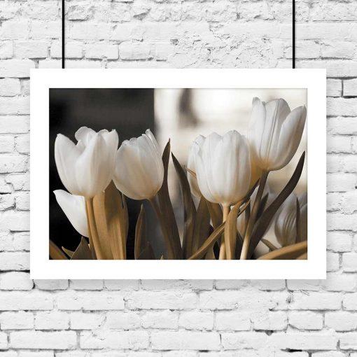 motyw białych tulipanów na plakacie